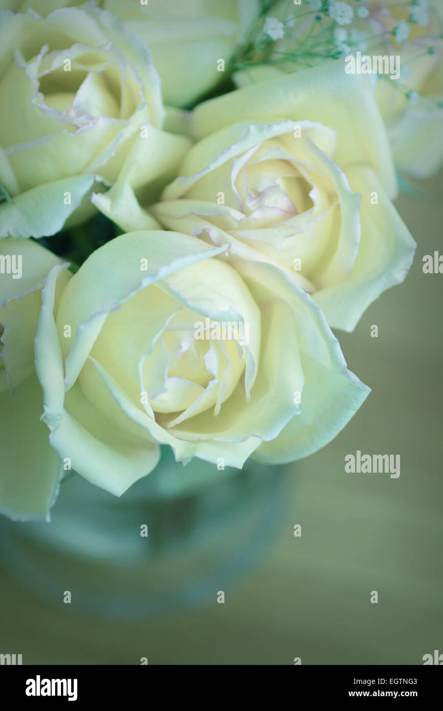 Roses in a vase with blue tone - Stock Image