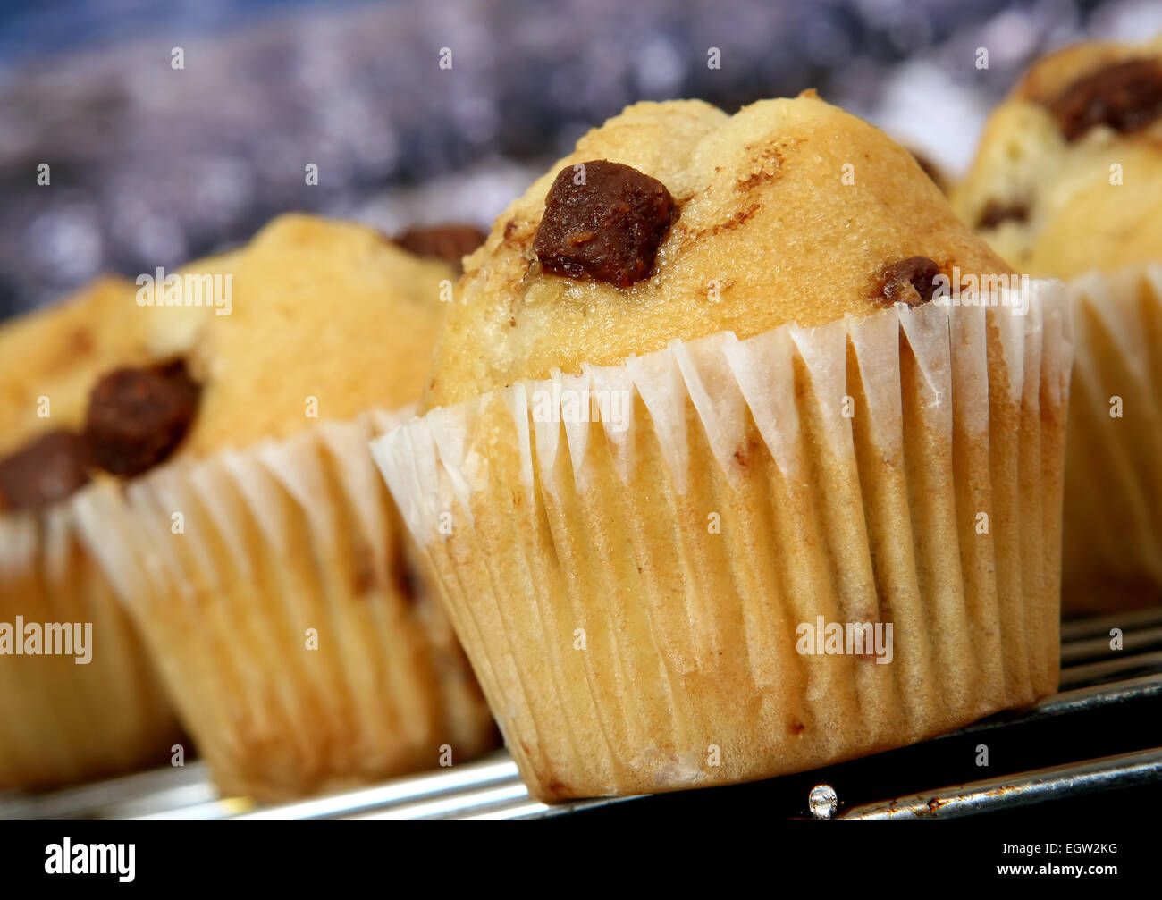 Golden Chocolate Chip Fairy Cake Muffins In The Kitchen