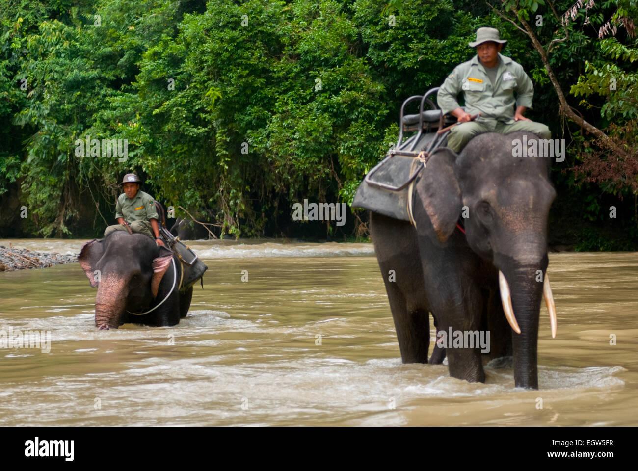 Elephant patrol in Gunung Leuser National Park, Sumatra. Stock Photo