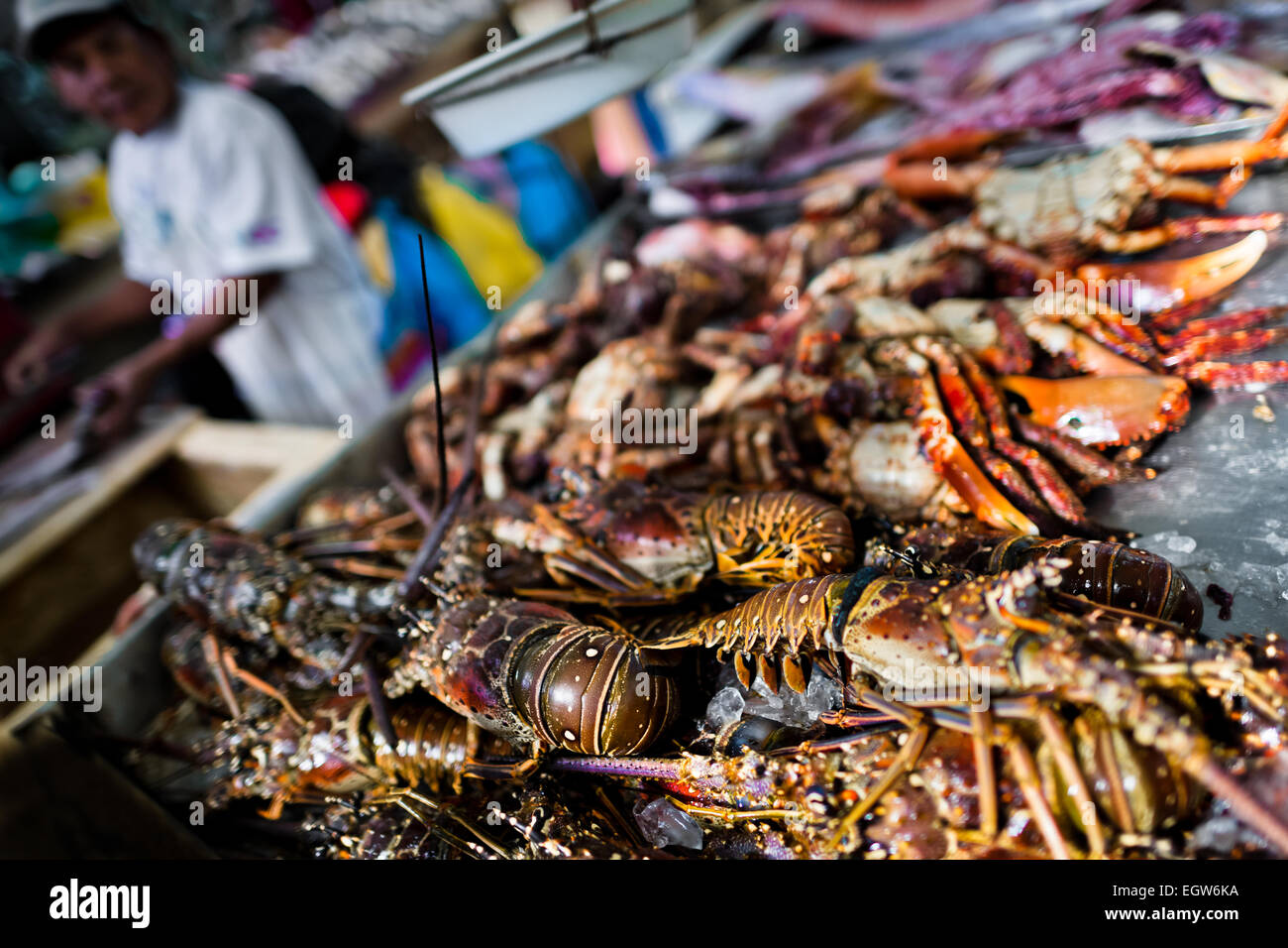 Fresh lobsters and crabs for sale are seen at Mercado de Mariscos seafood and fish market in Panama City, Panama. Stock Photo