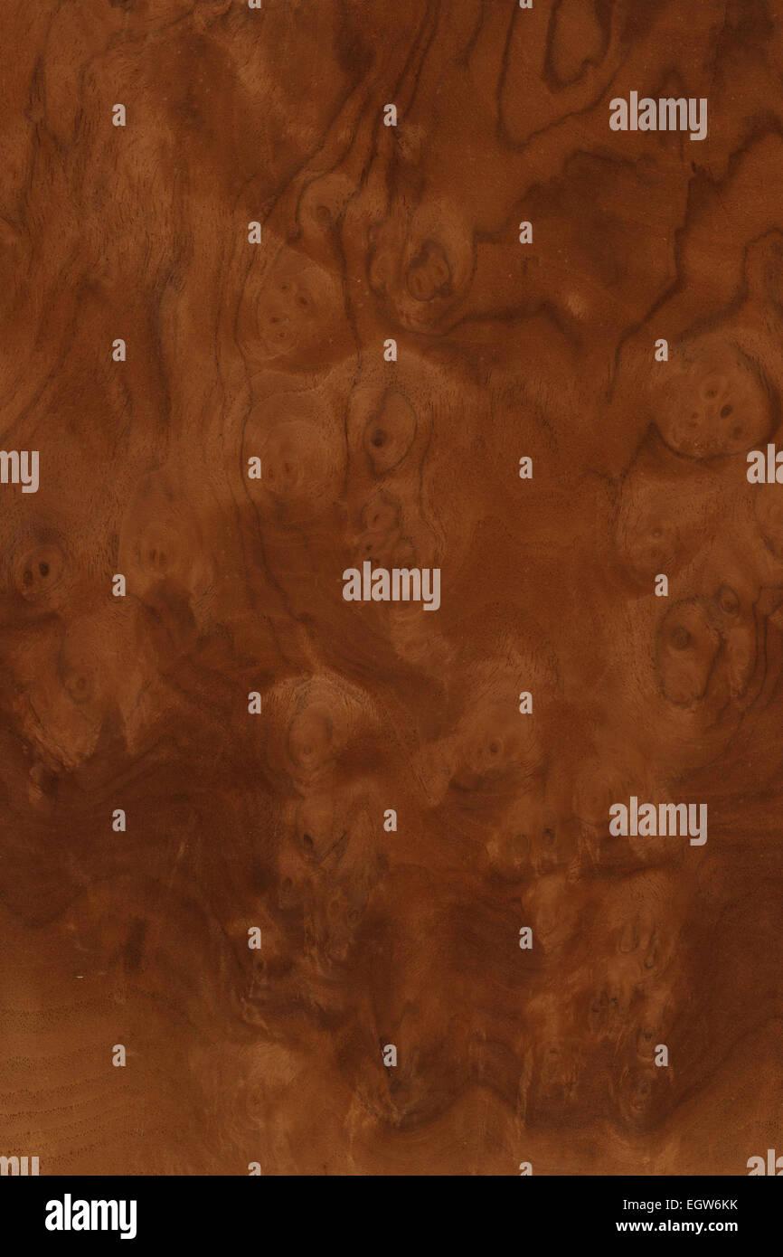 Burr Walnut Stock Photos Amp Burr Walnut Stock Images Alamy