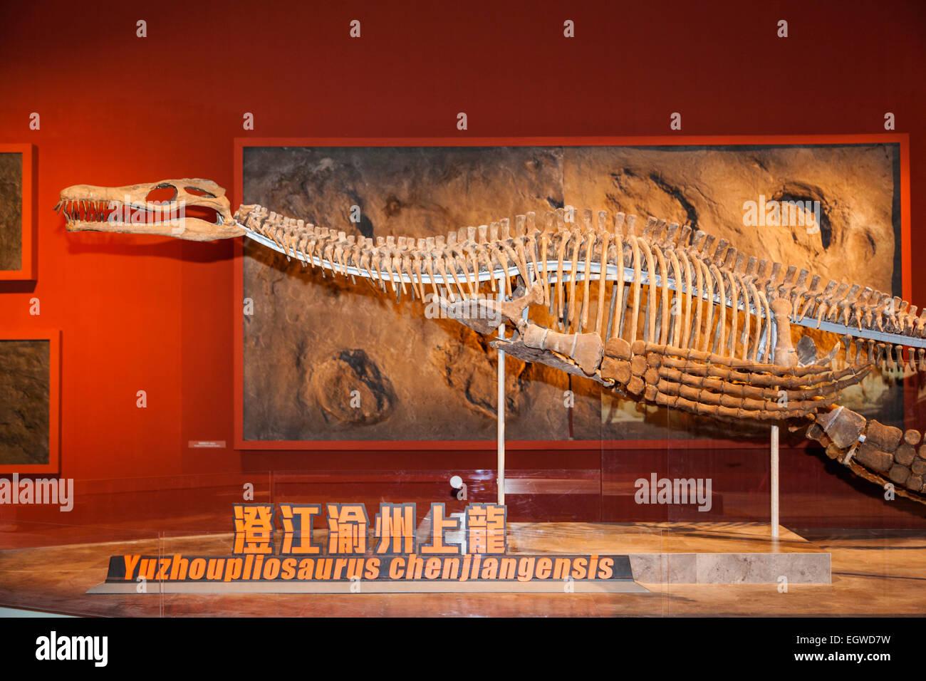 China, Skeleton of Yuzhoupllosaurus Chenjianensis - Stock Image