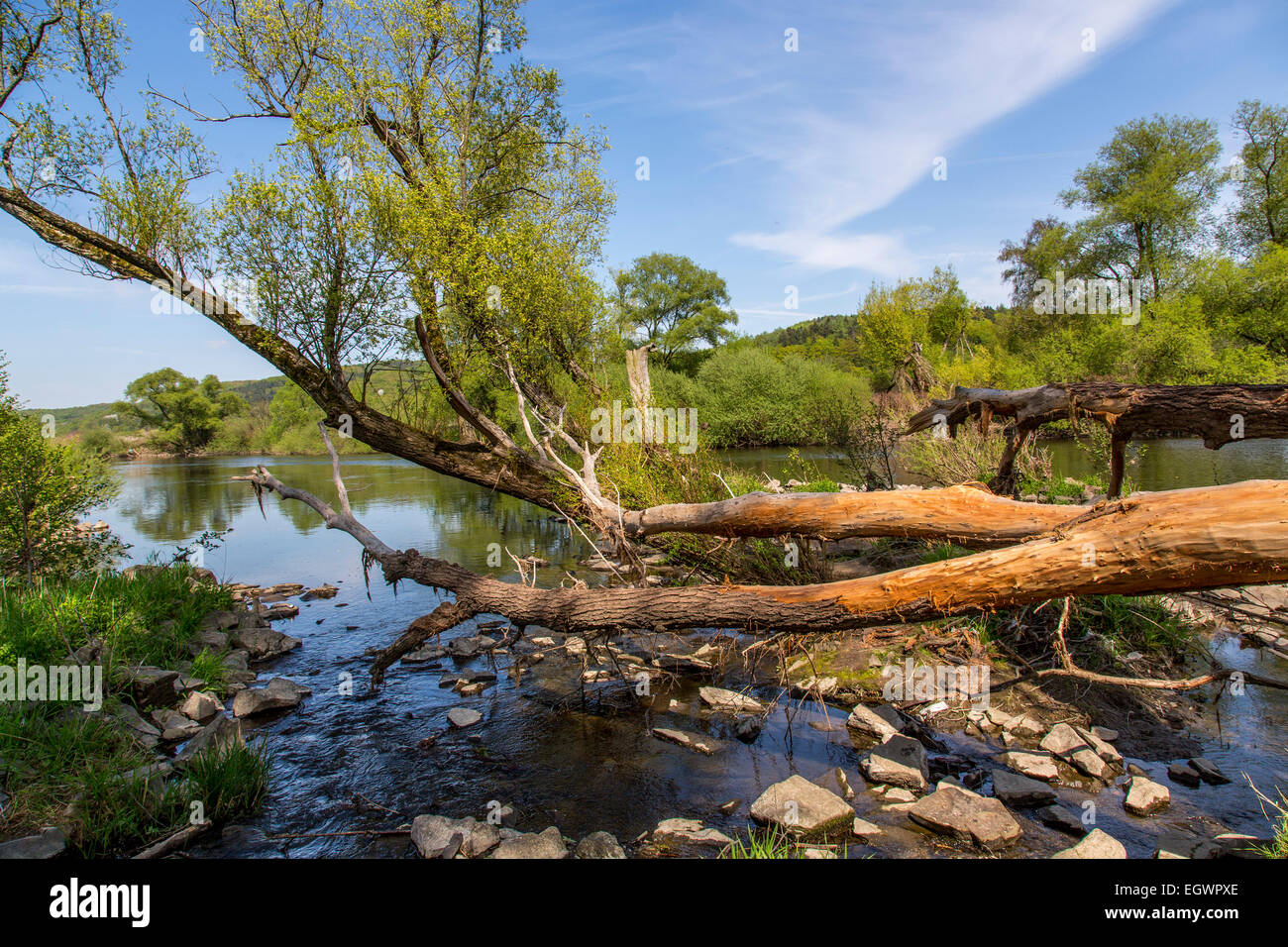 Nature preserve, river Ruhr, near Witten, Germany Stock Photo