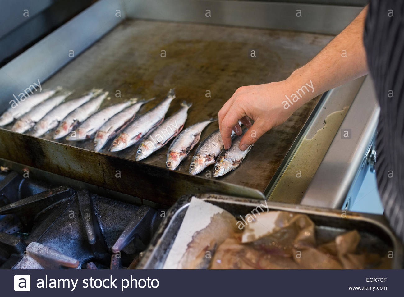 Chef placing small fish on flat top stove - Stock Image