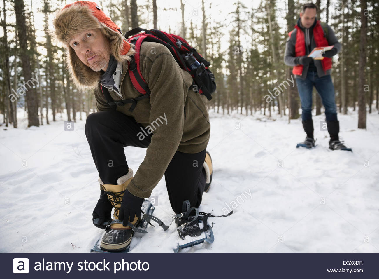 Man putting on snowshoes in snowy woods - Stock Image