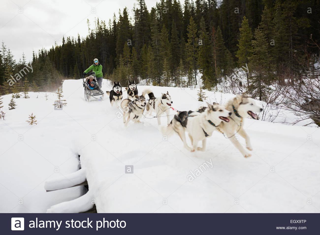Family dogsledding across snowy bridge Stock Photo