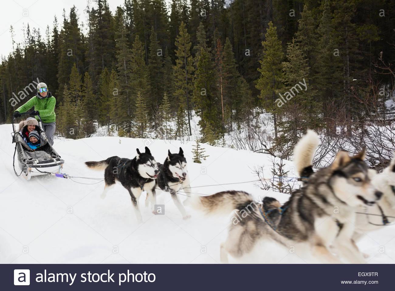 Family dogsledding in snow - Stock Image
