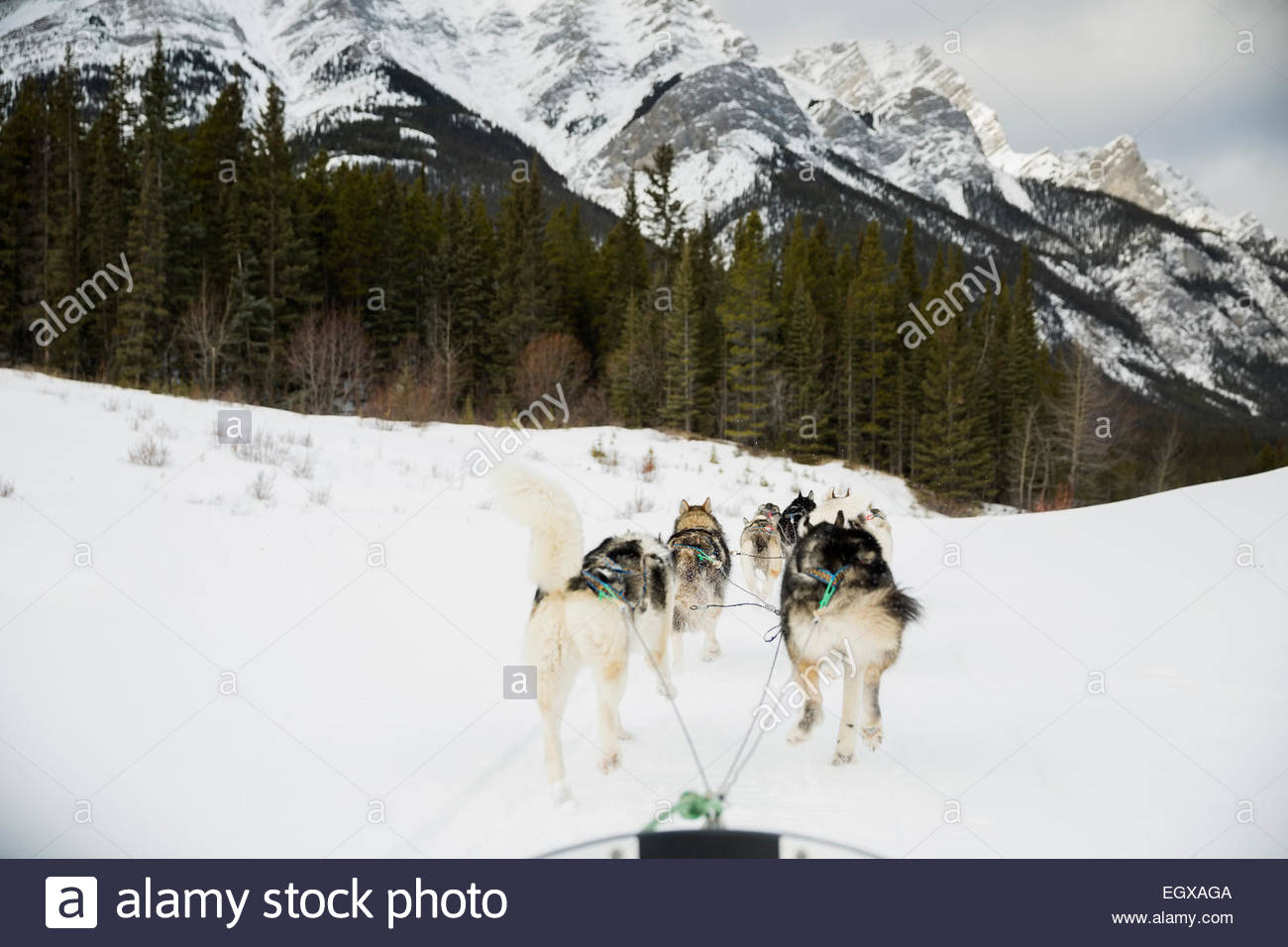Dogsled on the move below snowy mountains - Stock Image