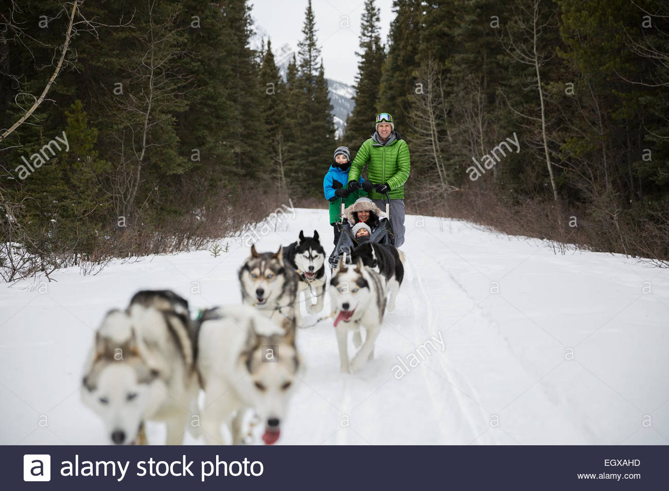 Family dogsledding in snow - Stock Image