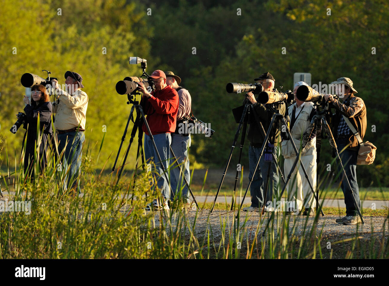 Photographers Audubon Rookery Venice Florida USA - Stock Image