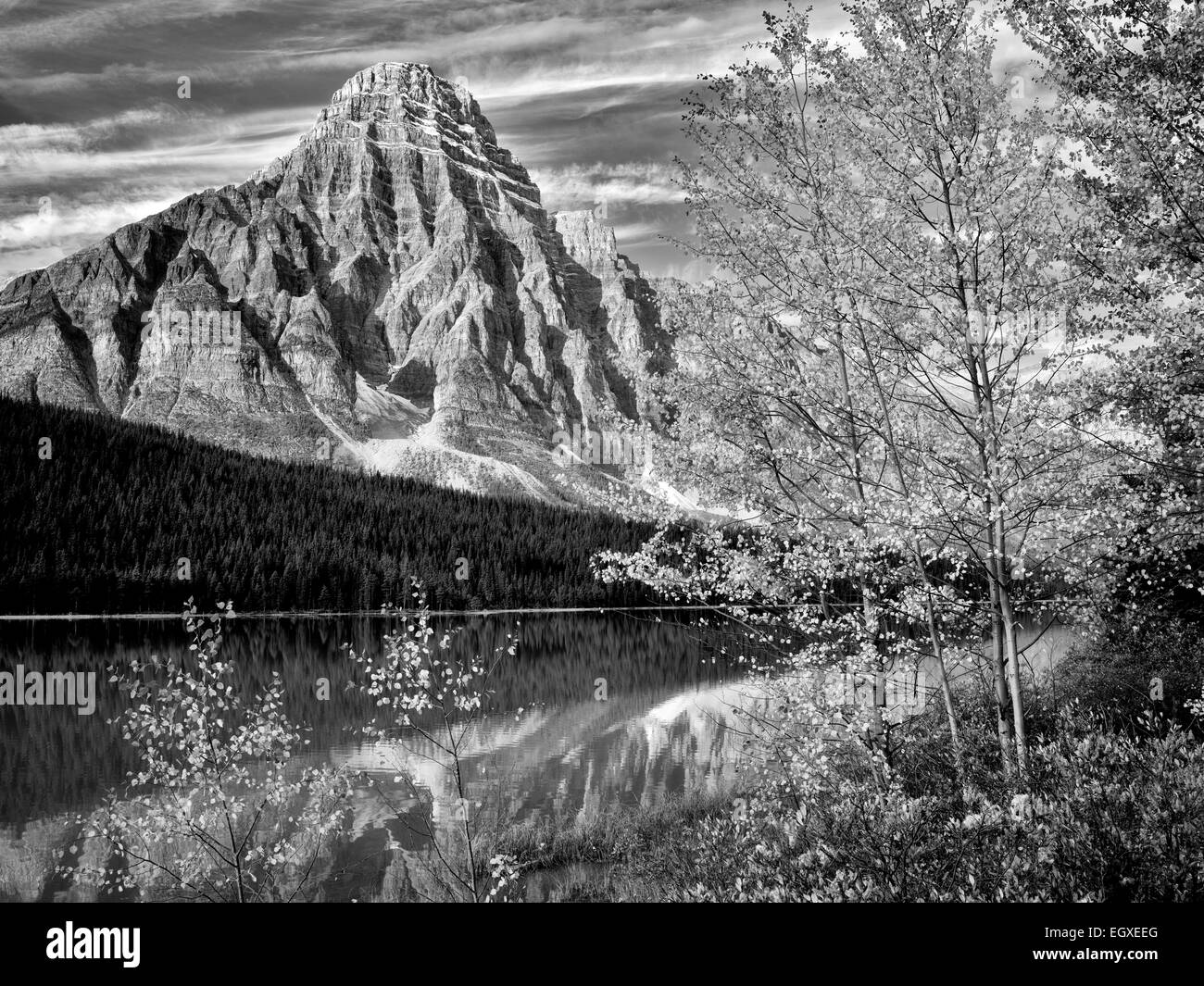 Waterfowl Lakes and Mt. Chephren with fall colored aspens.  Banff National Park. Alberta, Canada - Stock Image