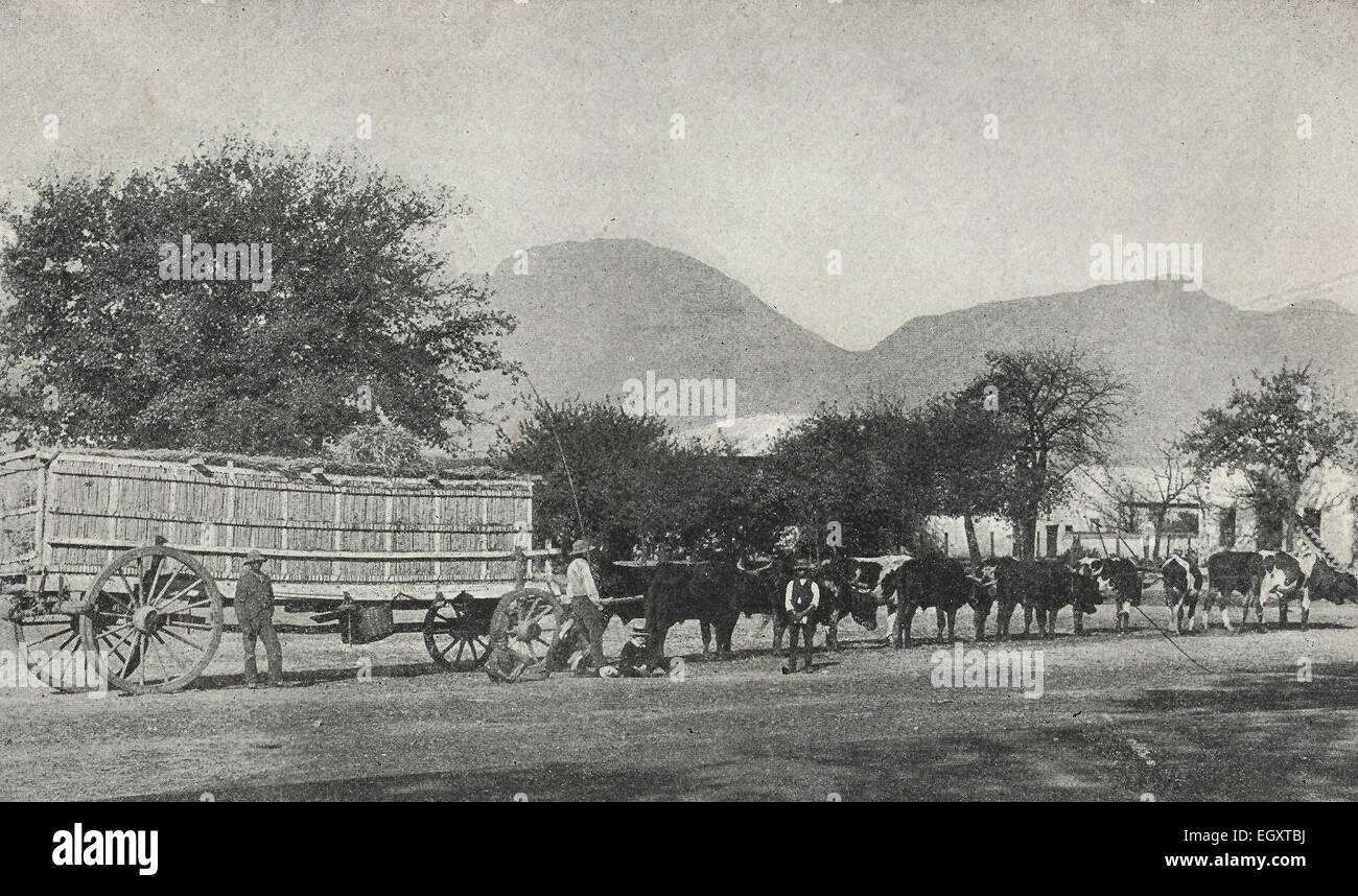 Going to Market - In South Africa the historical mode has been by ox and wagon.  The large wagon on four wheels - Stock Image