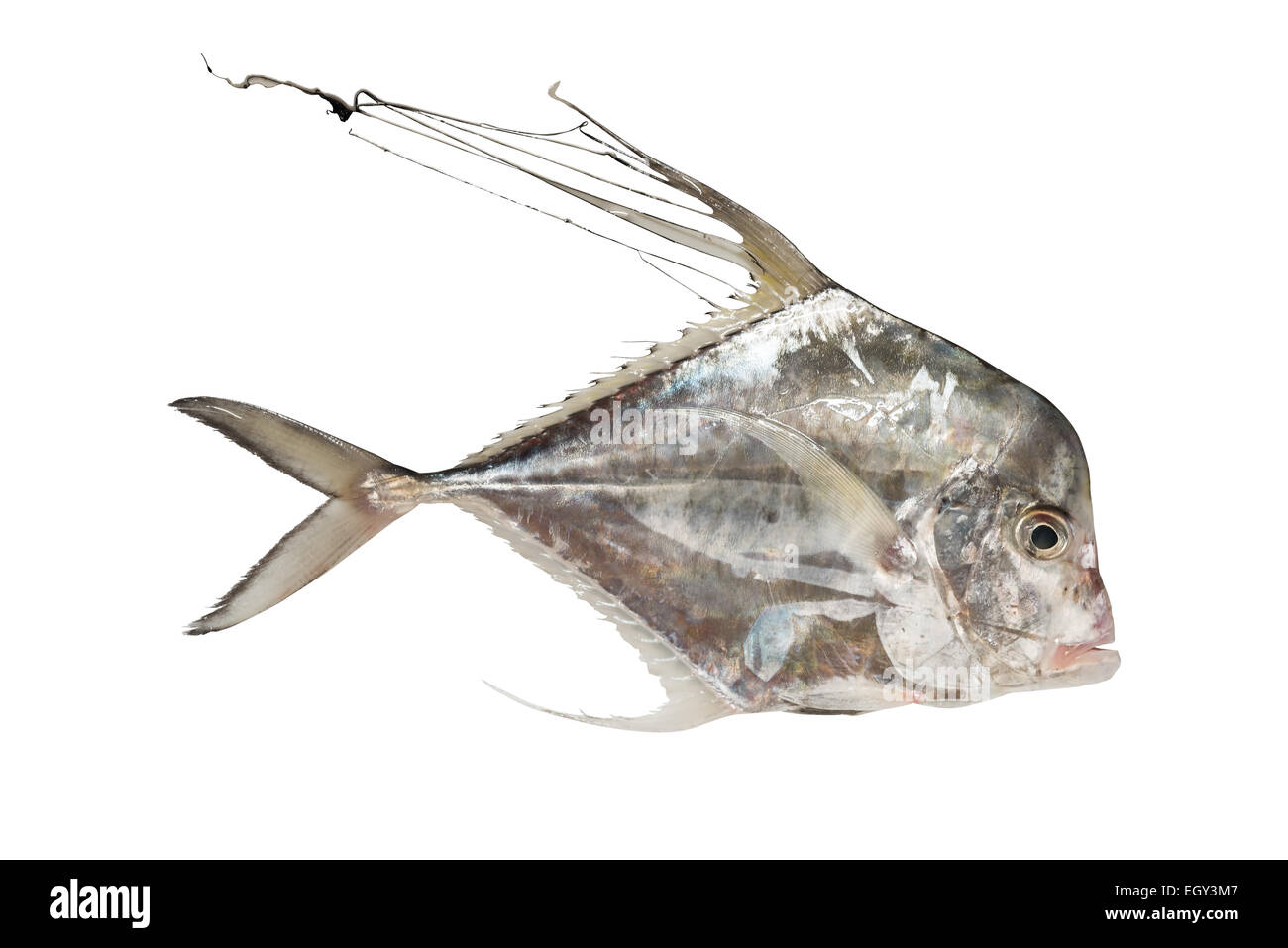 Schooling Fish Cut Out Stock Images Pictures Alamy