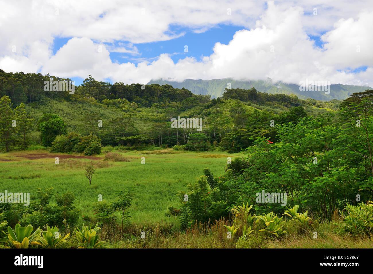 Keahua Forestry Arboretum (part of Wailua River State Park ), Kauai, Hawaii, USA - Stock Image
