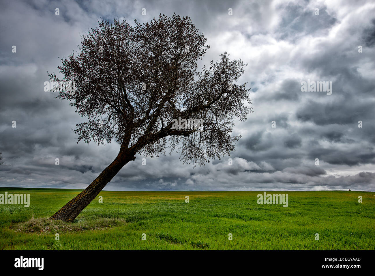 Spain, Province of Zamora, warped tree under cloudy sky - Stock Image