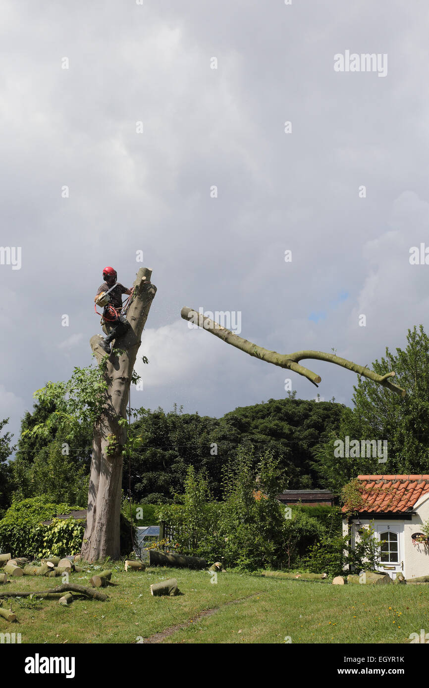 Branch being cut off a tree - Stock Image