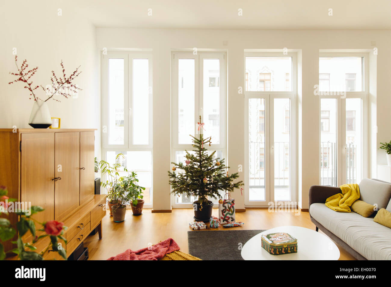 Modern loft living room with potted blue spruce Christmas tree Stock ...