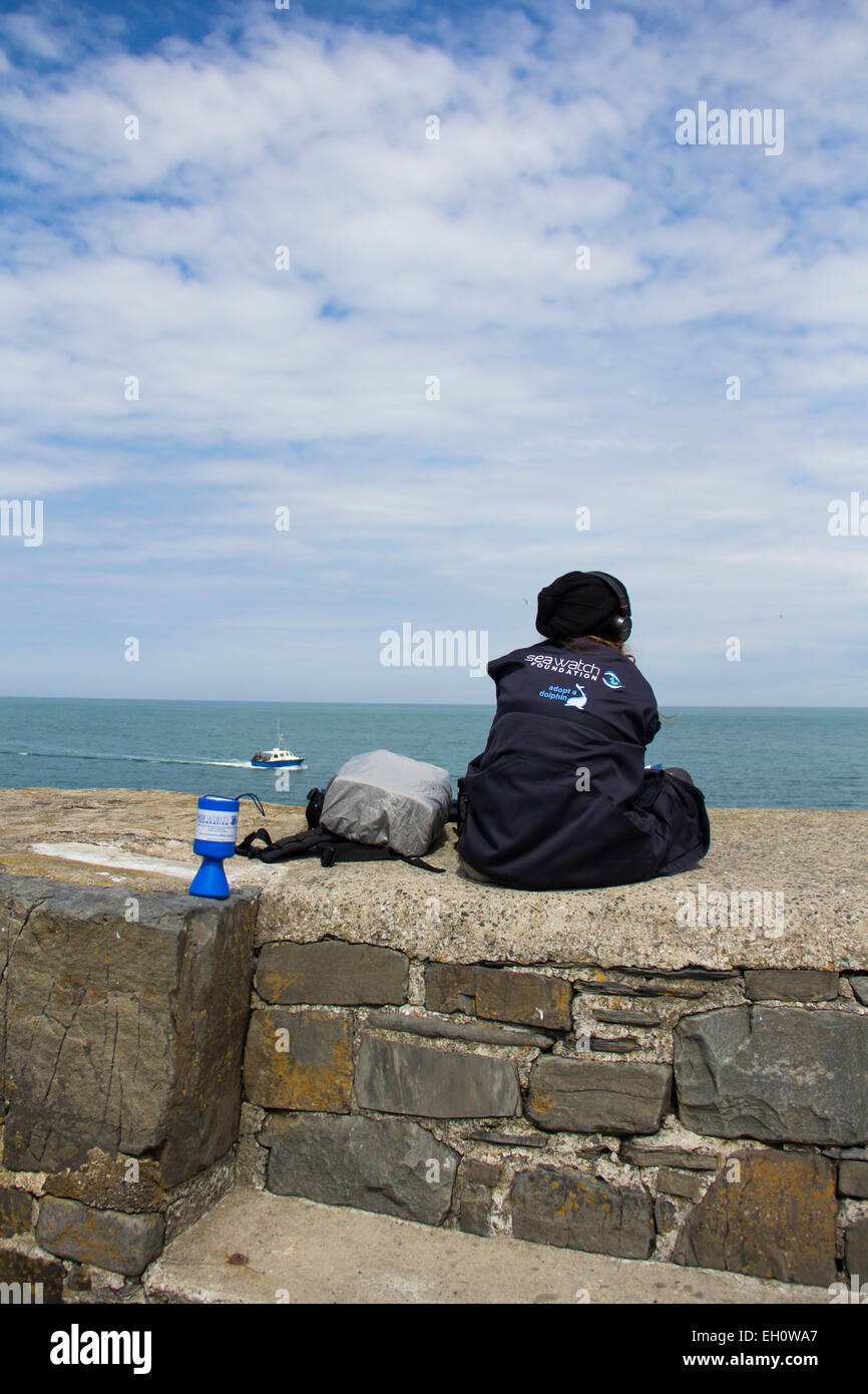 A dolphin spotter, an observer from the Seawatch Foundation on the stone pier at New Quay, Ceredigion,  looking Stock Photo
