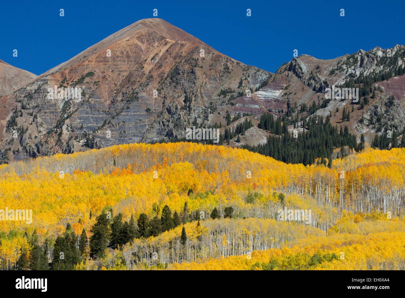 Fall in Gunnison National Forest, Colorado Stock Photo