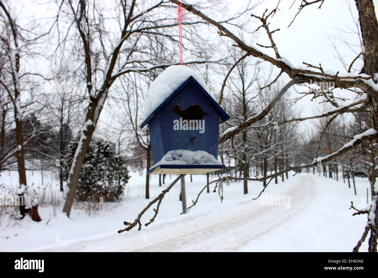 Photo of a forest and a small blue house hanging from a tree that protects the birds that endure during the cold - Stock Image