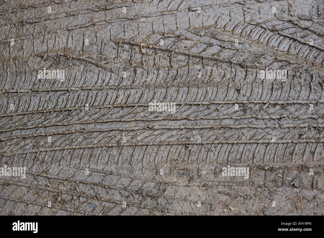 Tyre tracks in the mud - Stock Image