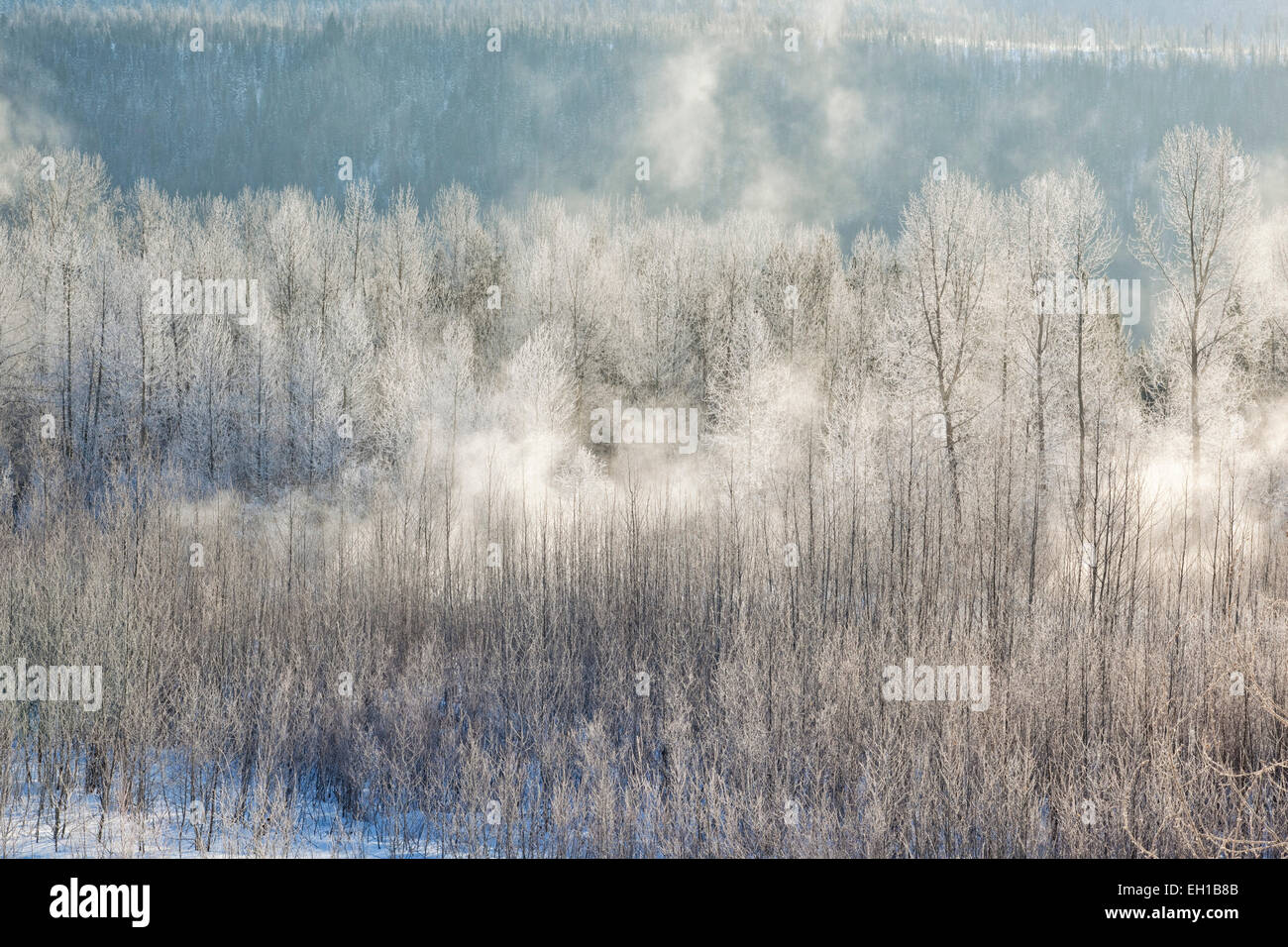 Cold winter fog in valley, Fernie, British Columbia, Canada. - Stock Image
