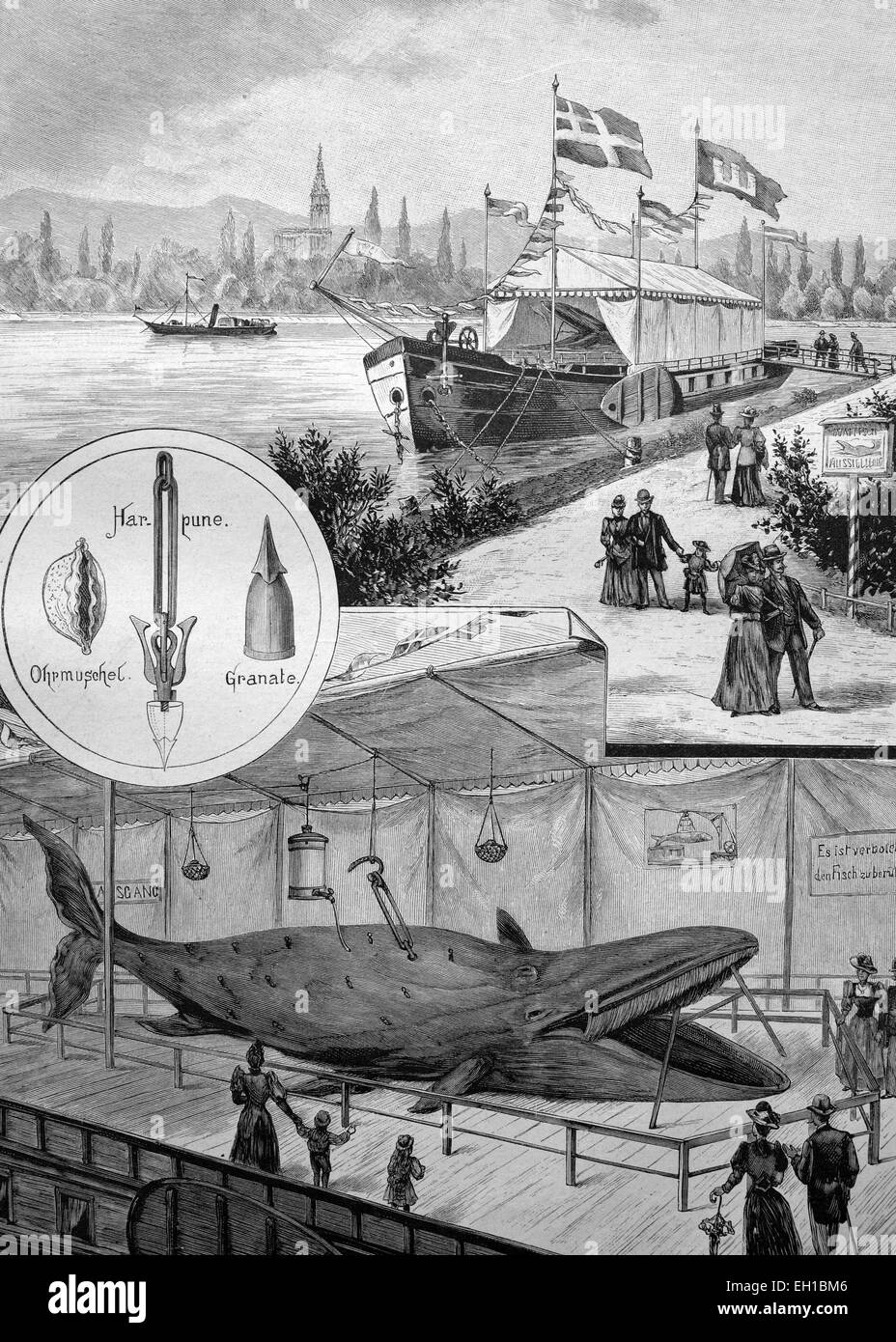 Floating whale exhibition on the Rhine River, historical illustration, ca. 1893 - Stock Image