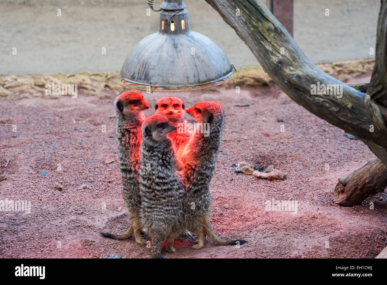 Heat Lamp Stock Photos Amp Heat Lamp Stock Images Alamy