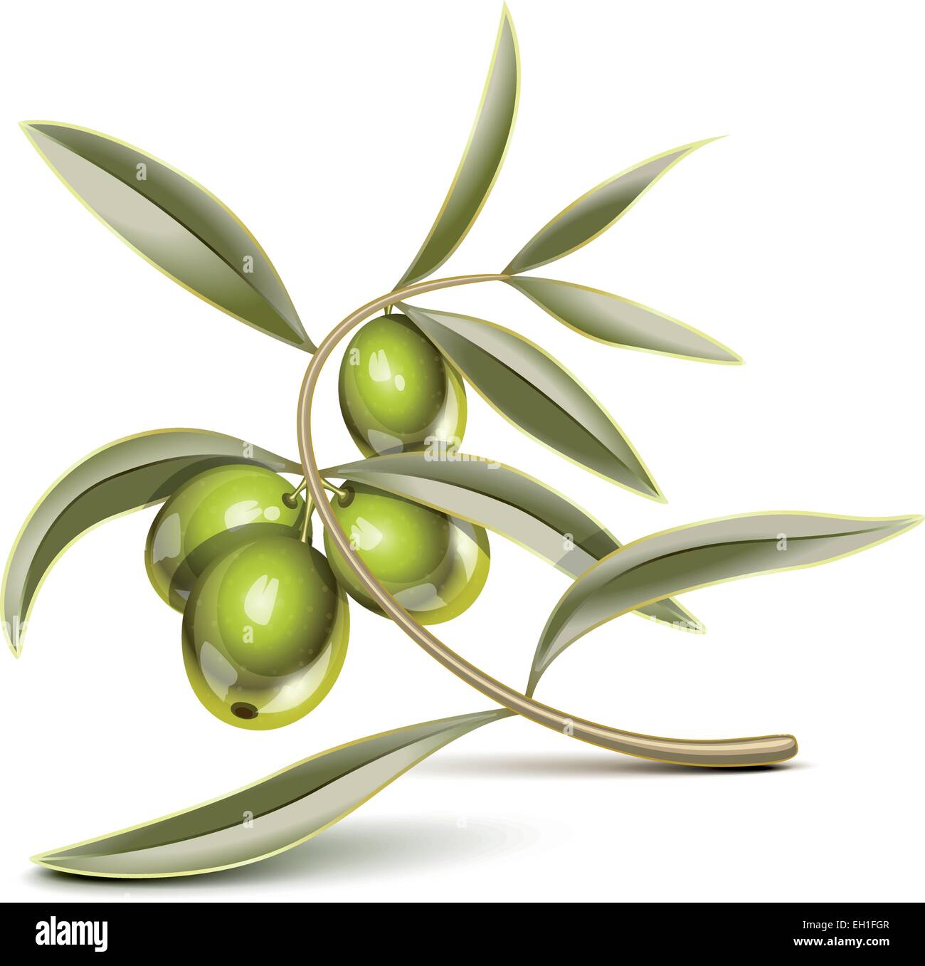 Green olives on a branch - Stock Vector