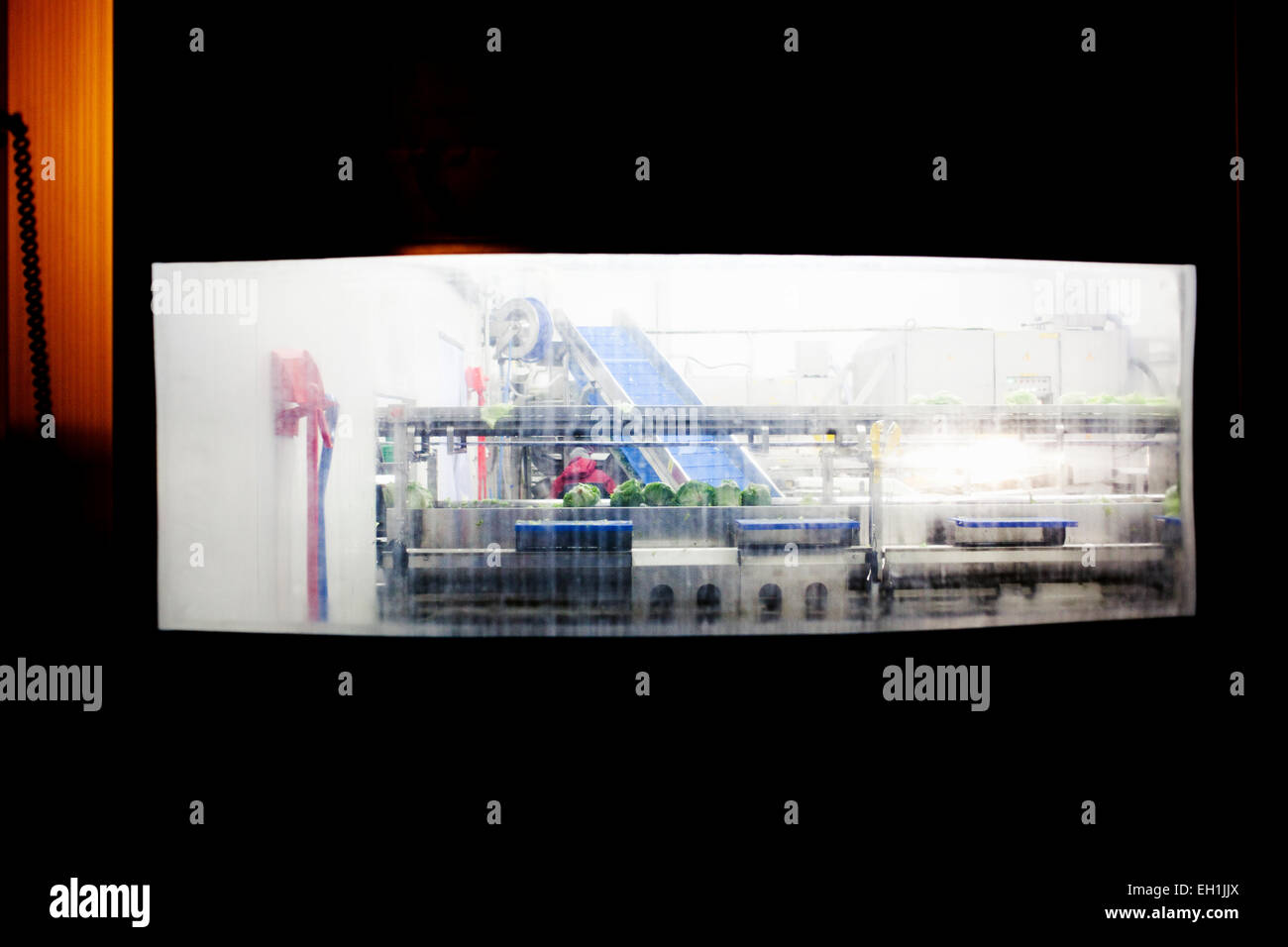 Conveyor belt in salad factory - Stock Image