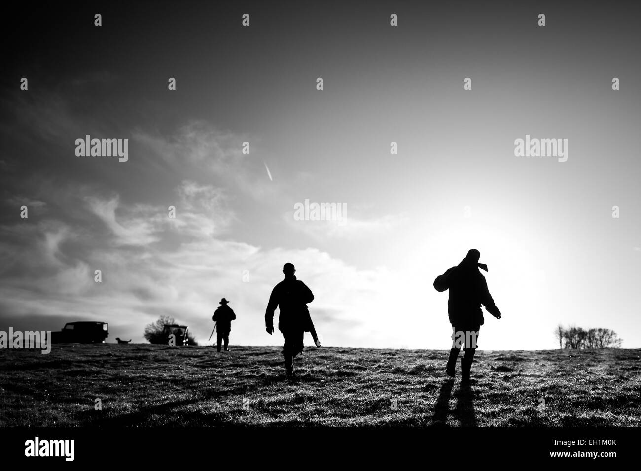 Black and white landscape photograph of three male guns walking to the next drive on a game shoot in England, UK - Stock Image