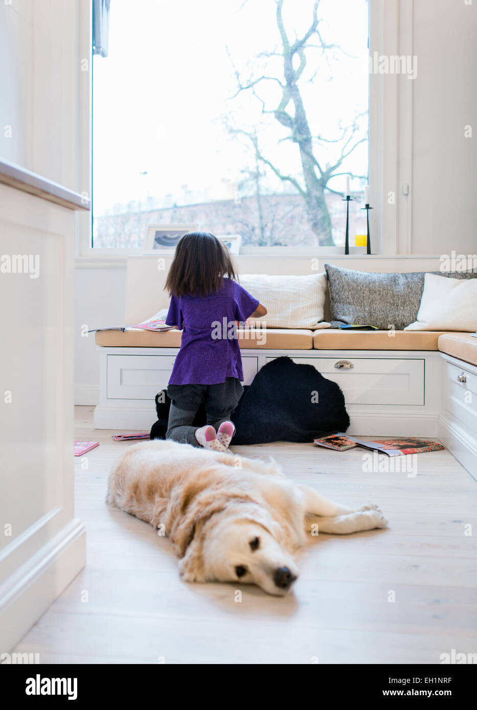 Girl studying in living room with dog relaxing in foreground - Stock Image