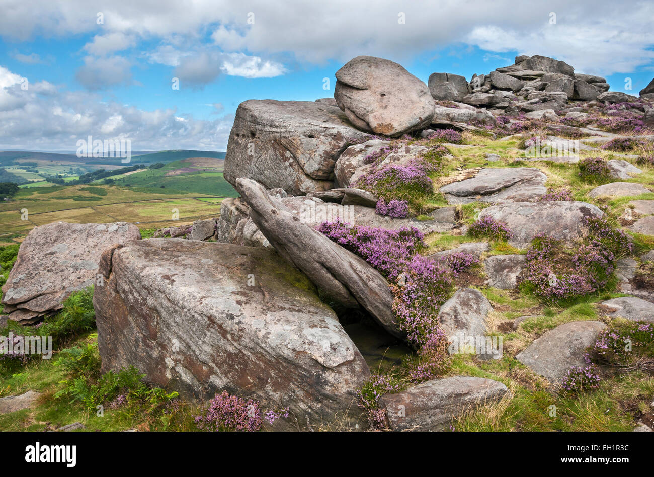 Over Owler Tor in the Peak District on a summers day. Heather blooming around the gritstone rocks. - Stock Image