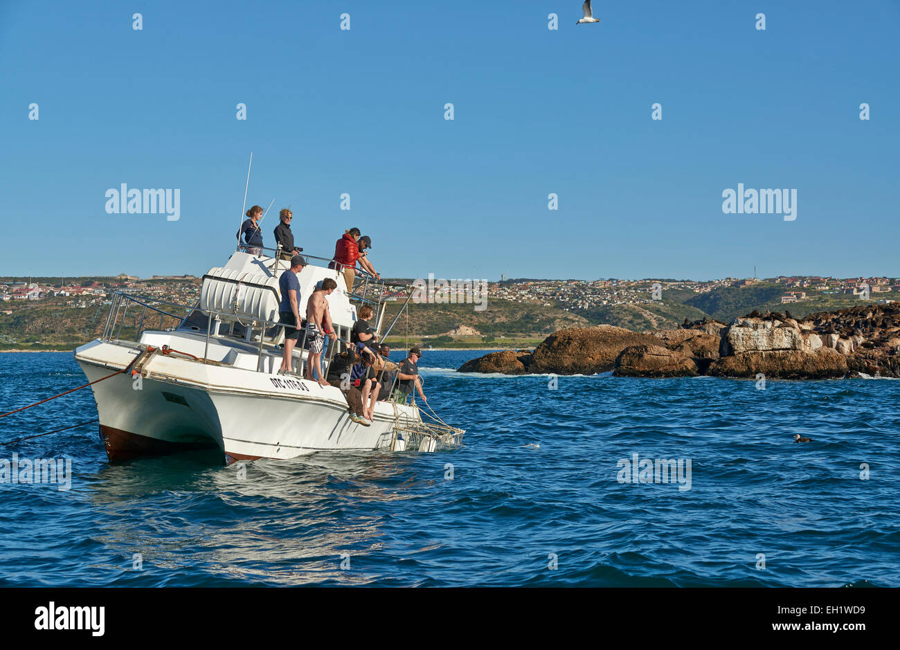 cage diving boat with tourists waiting for the Great White Shark ,Mossel Bay, Western Cape, South Africa - Stock Image