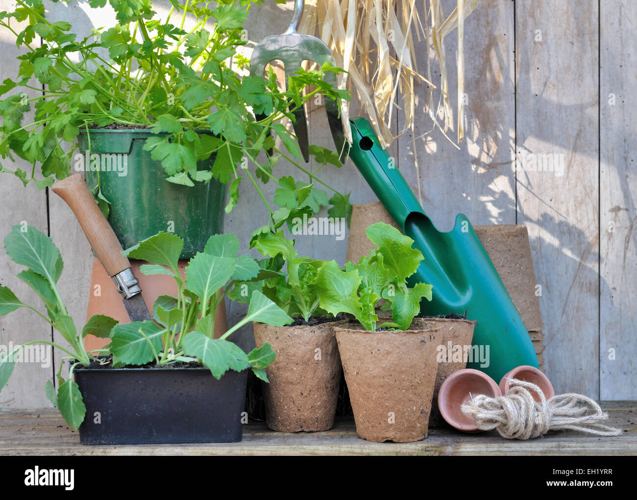 Plants And Gardening Accessories With Tools On Wooden Background   Stock  Image