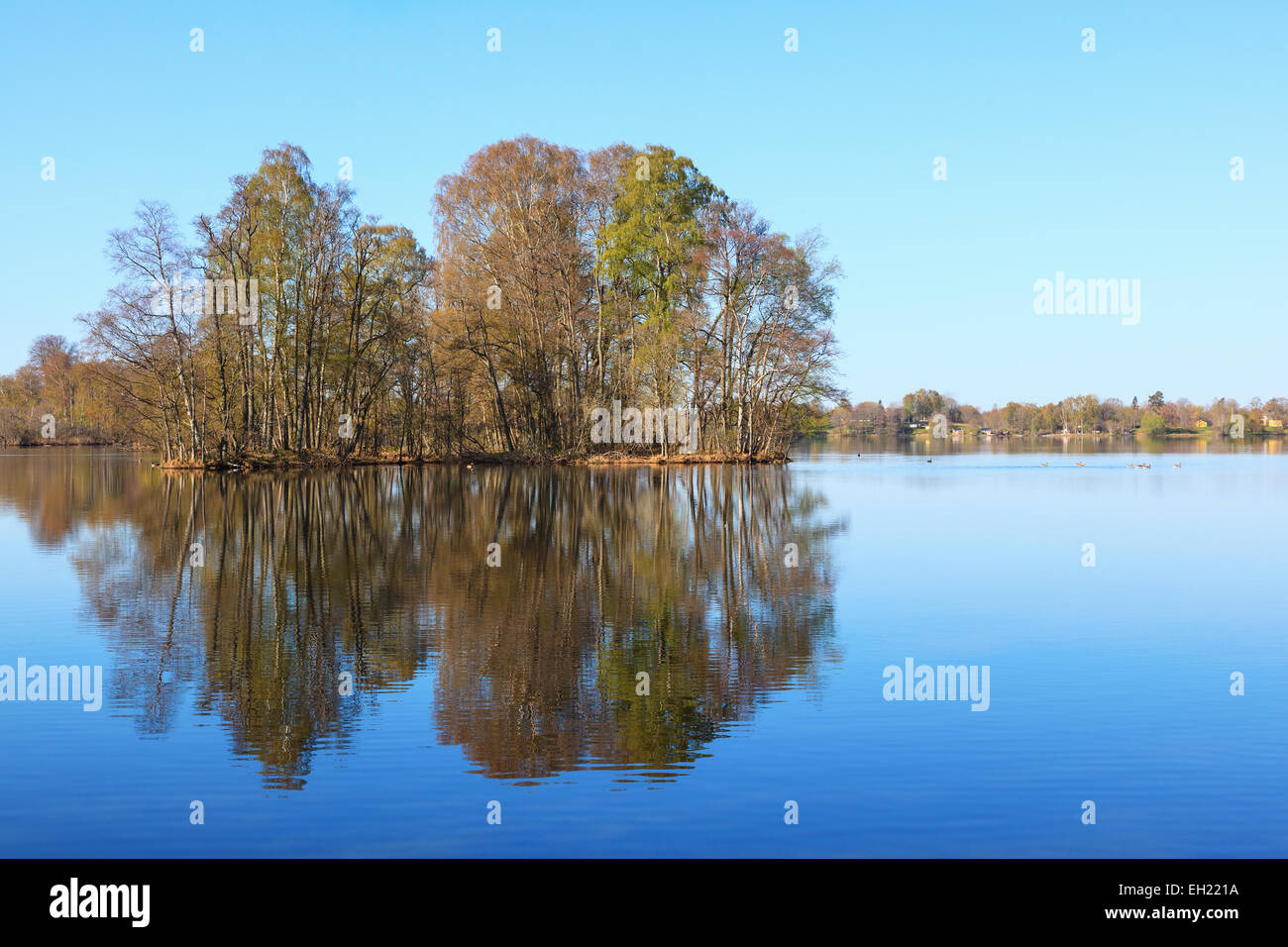 Reflections of the forest in early spring landscape - Stock Image
