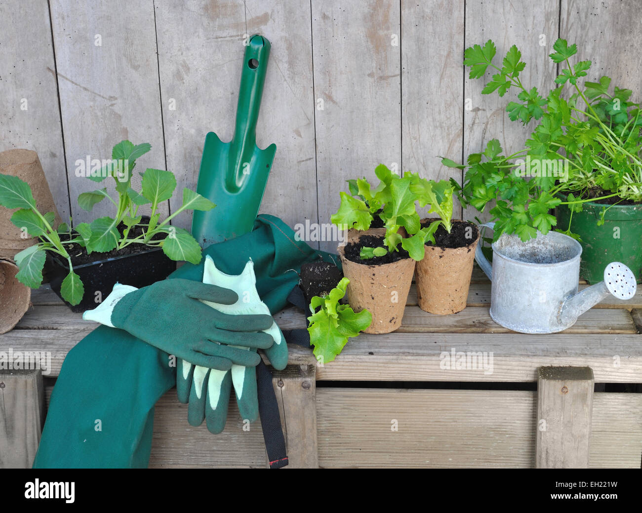 Vegetable Plants And Gardening Accessories Placed On Wooden Plank   Stock  Image