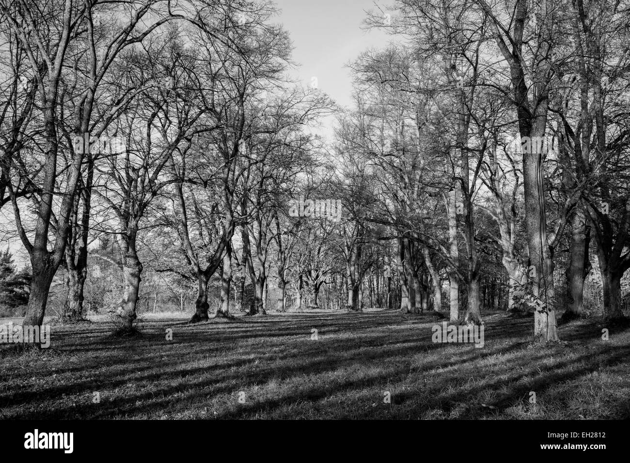 a black and white photography of a mystical forest - Stock Image