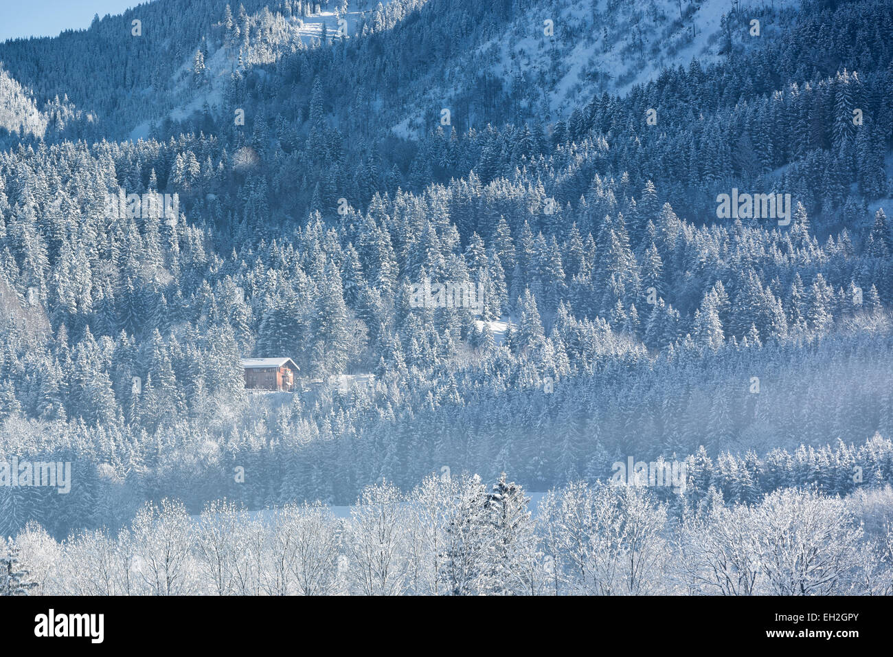 Alpine hut in wintery forest, Bavaria, Germany - Stock Image