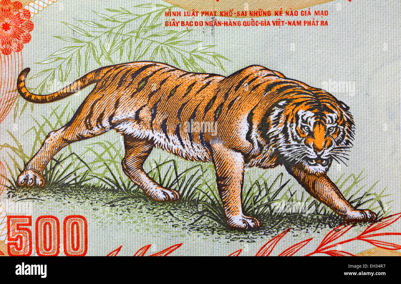 Growling tiger from 500 dong banknote, South Vietnam, 1972 - Stock Image