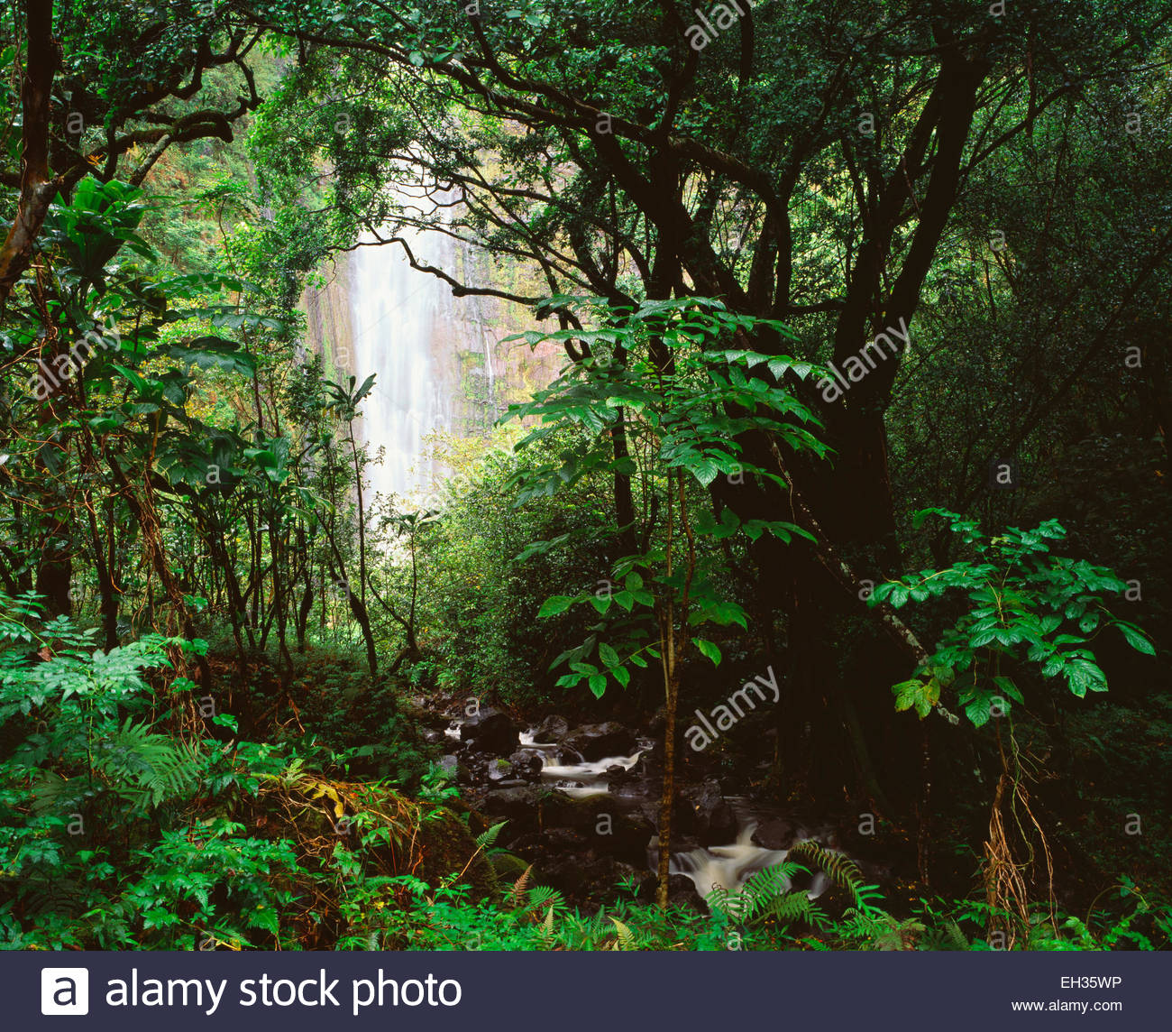 400 Foot Waimoku Falls,  Haleakala National Park, Maui, Hawaii. - Stock Image