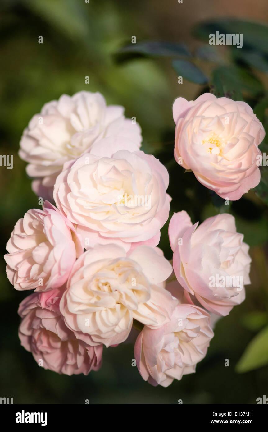 bouquet parfait stock photos bouquet parfait stock images alamy. Black Bedroom Furniture Sets. Home Design Ideas