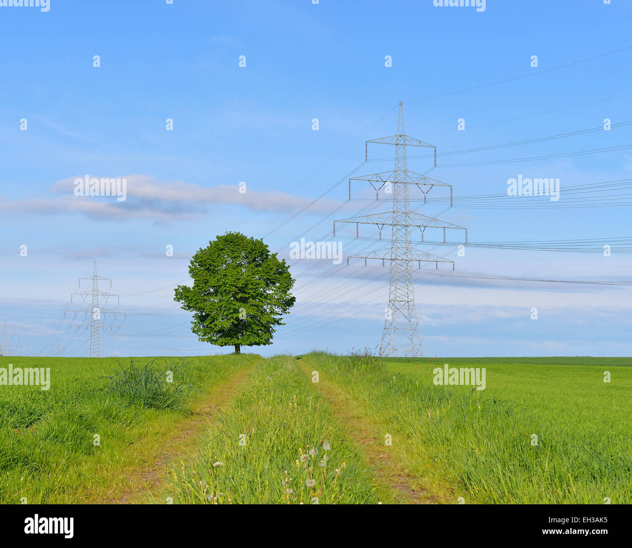 Tree in field next to pathway with hydro tower, Schwabhausen, Upper Bavaria, Bavaria, Germany Stock Photo