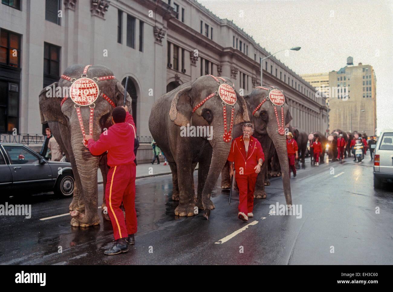 Ringling Brothers Barnum and Bailey Circus Parade through Midtown Manhattan - Stock Image