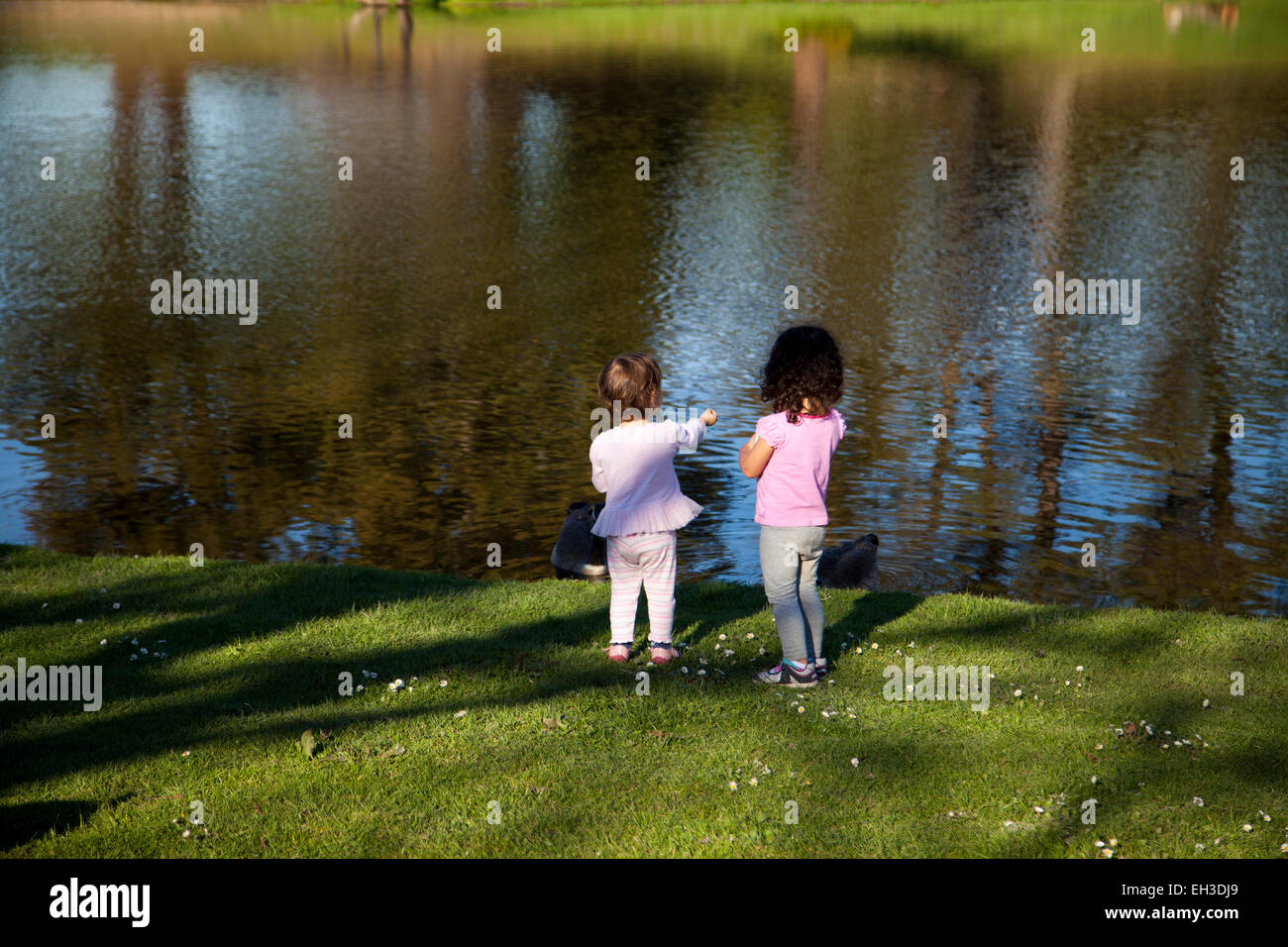 Two three year-olds feeding the geese at a pond, Novato, California, USA - Stock Image