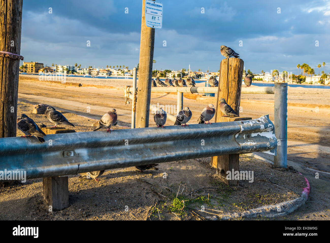 Pigeon Images Stock Photos Amp Pigeon Images Stock Images