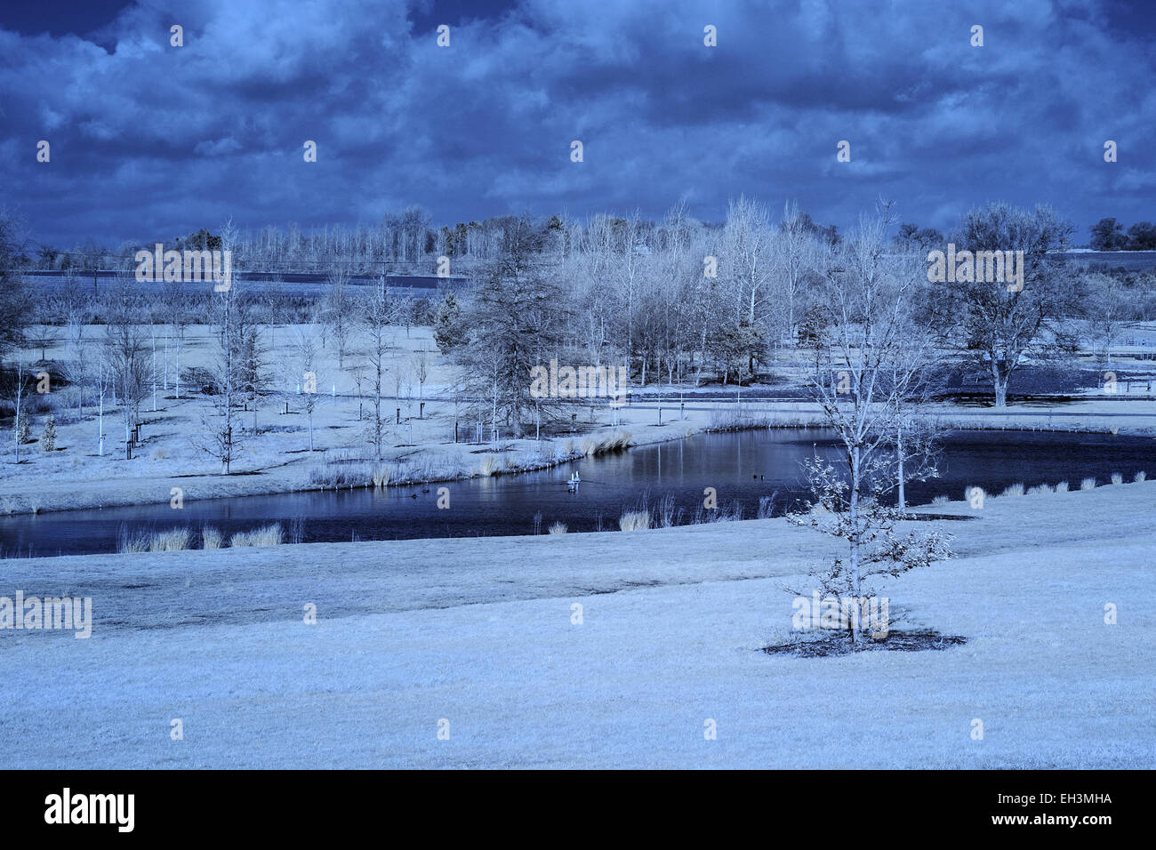 Infra Red Image of Gardens at Hyde Hall - Stock Image
