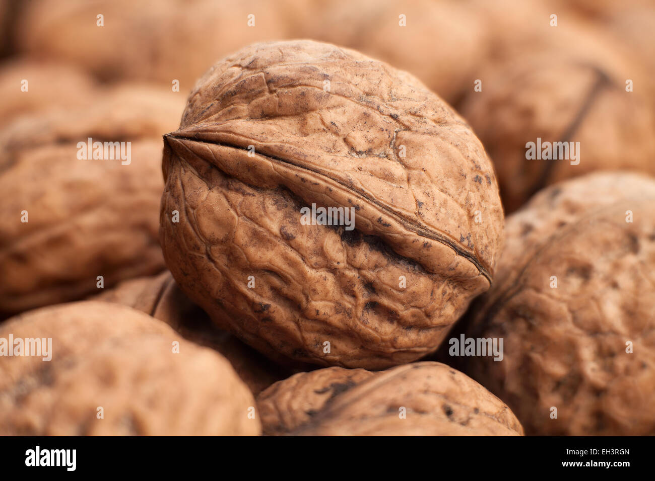 walnuts closeup - Stock Image