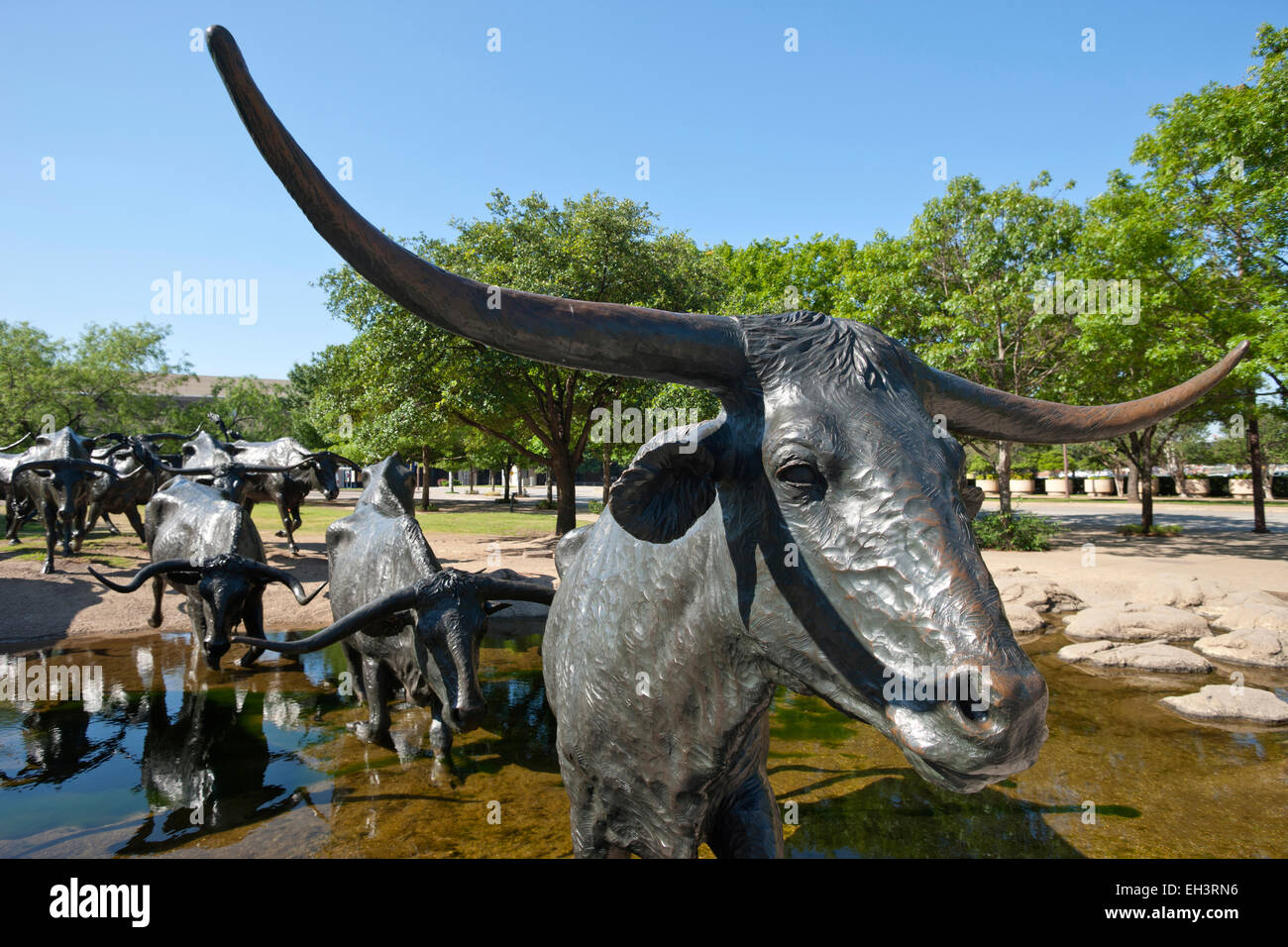 Cattle Drive Texas Longhorn Cattle Stock Photos Amp Cattle