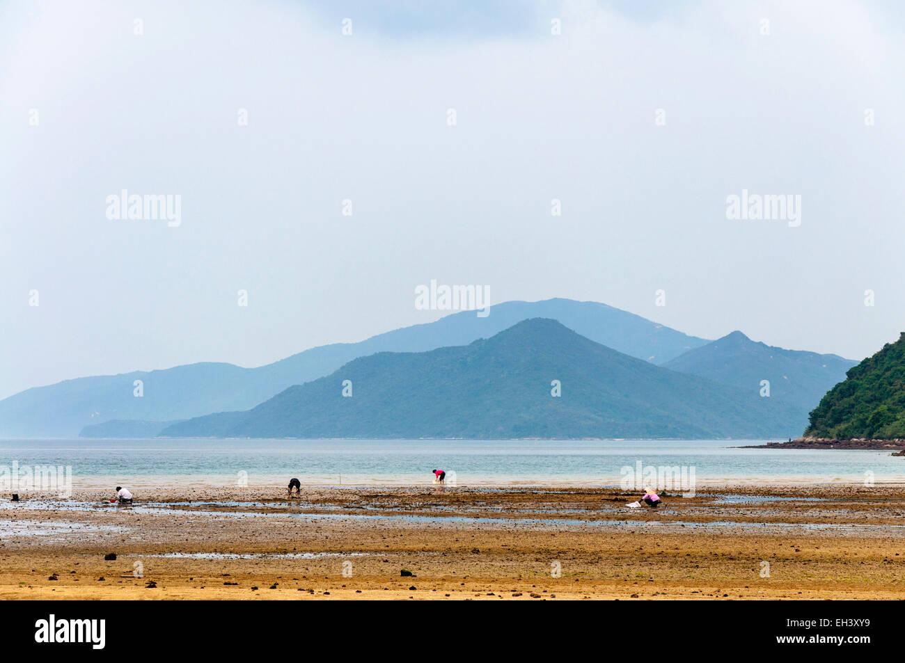 People digging for shellfish at Starfish Bay, New Territories, Hong Kong SAR - Stock Image